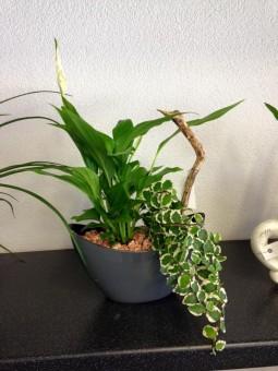 Terrine de plante d'intérieur