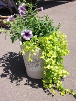 Terrine de plante d'extérieur