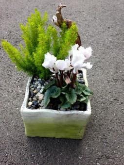 Terrine de plante...