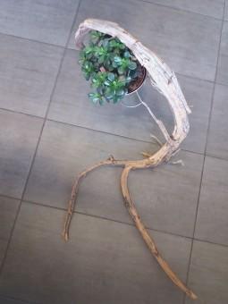 Bois flotté branches sur socle