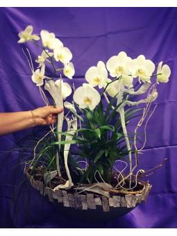 Terrine de plante blanche