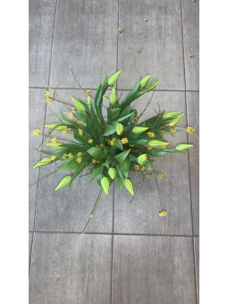 Tulipe dans sa coupe